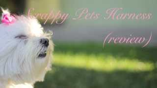 No-choke Harness Review For Small Dogs | Scrappy Pets Harness Review