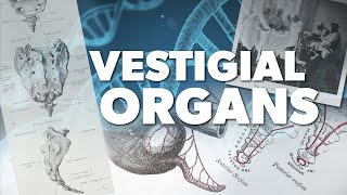 Vestigial Organs | Proof for God