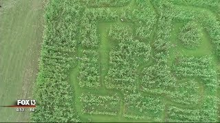 Go Inside -- And Above -- The Fox Squirrel Corn Maze In Plant City