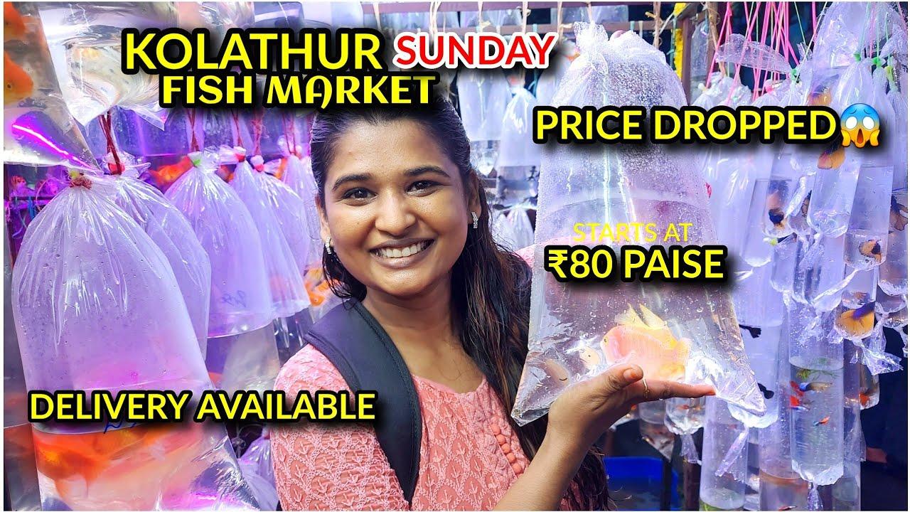 Kolathur SUNDAY Fish Market Vlog
