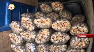 Rusiyada Cəlilabad kartofuna tələbat azalıb
