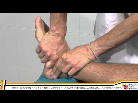 terapia-manual-i:-pie-y-rodilla