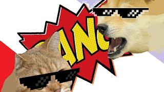 Śmieszne zwierzęta #4 - Psy Papugi i Koty!!