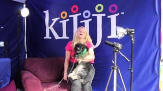 Yorkie Poo, Milo & Scooter Bear - June 8, 2013