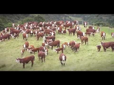 Five Nations Beef Alliance - A world look at the cattle industry