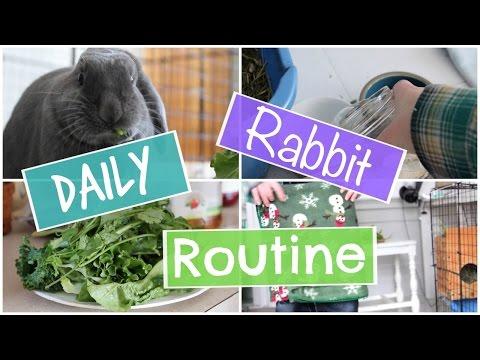 daily-rabbit-routine---stormyrabbits