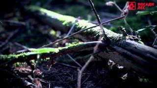 Красивейшие видео для релакса - Красота Европейского леса(Внесите вклад в восстановление лесов России, посадите дерево онлайн на сервисе http://posadiles.ru/#y Всего 3 просты..., 2016-01-22T13:19:24.000Z)