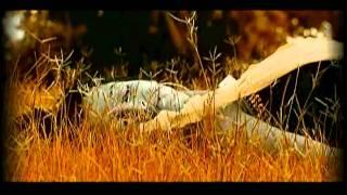 Tujhe Bhoolna To Chaha Lekin Bhula Na Paye [Full Song] Bewafa Sanam- Hits Of Ataulla Khan