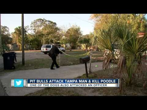 Two pit bulls drag poodle away from owner and cannibalize him then attack police officer