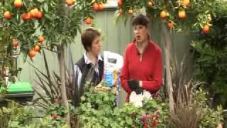 The Garden Tap - GrowBetter Program 02