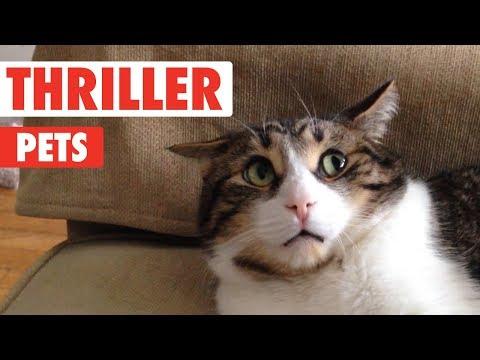Thriller Pets