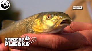 Маринка рыба редкая Узбекистан Планета рыбака