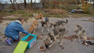 Alpha Male in the Pack doesn't Allow Other Dogs to Eat until He is Full