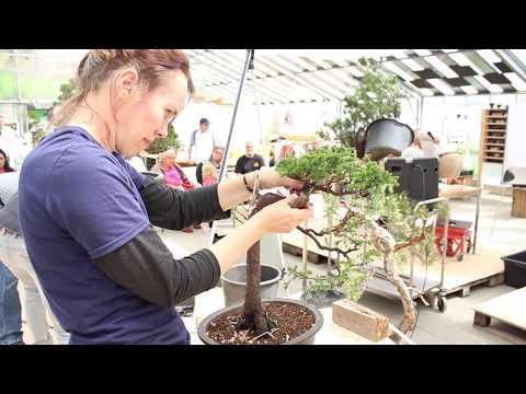 Bonsai demo by Jennifer Price
