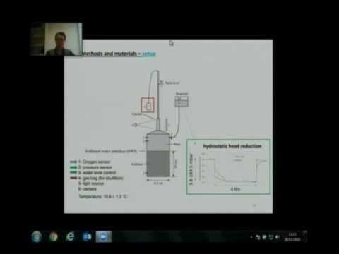 The role of sediment structure in gas bubble storage and release