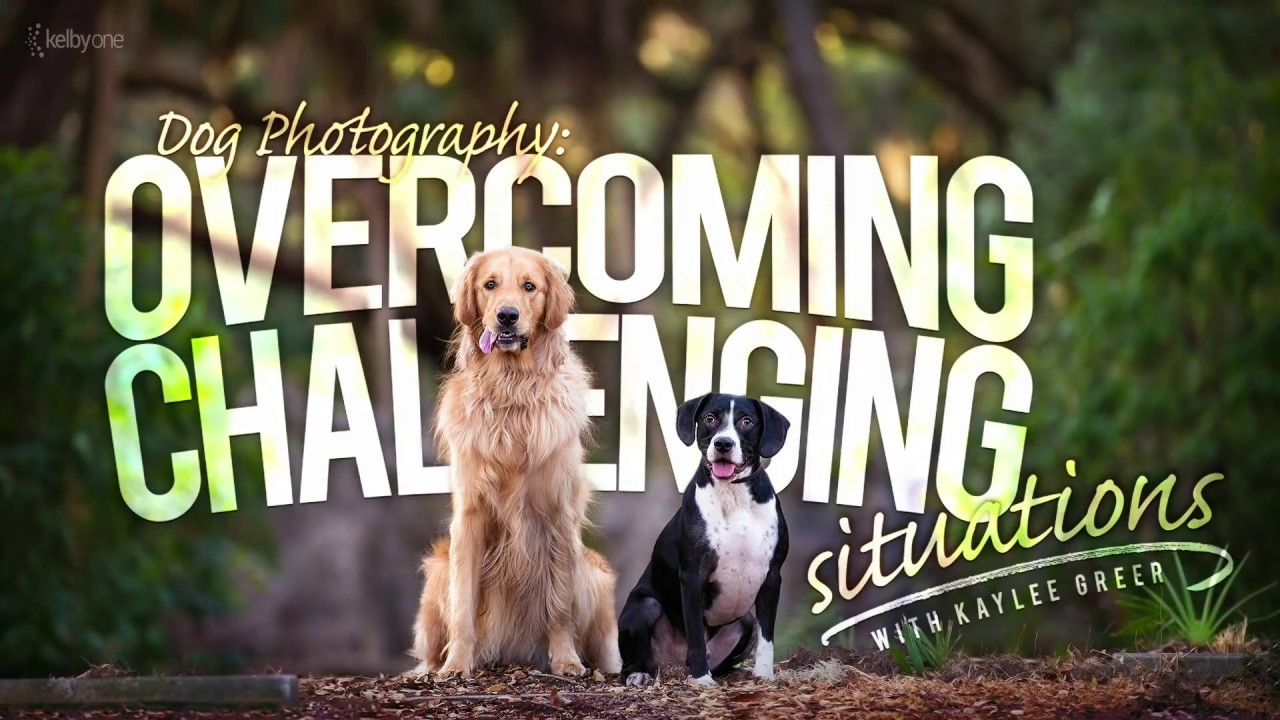 dog photography overcoming challenging situations official dog photography overcoming challenging situations official trailer