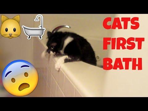 Cats' First Bath!