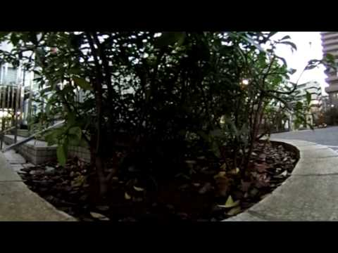【360°】アイドルデート・公園ネコ・田中由姫ちゃんと二人きり