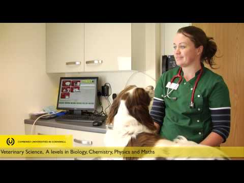 What's a career as a Veterinary Surgeon like?
