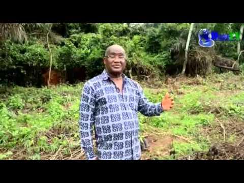 Projet de reboisement en Côte d'Ivoire avec l'EILDD de Daniel Tiécoura