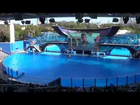 Ocean Discovery orca show from Wild Days SeaWorld Orlando Jan 16, 2016
