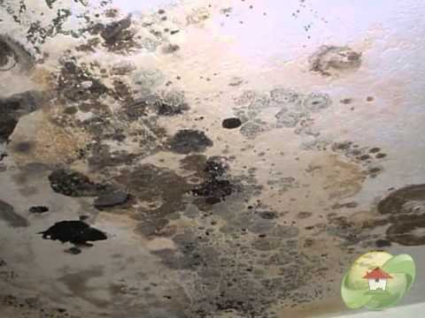 How To Kill Black Mold YouTube - How to kill black mold in bathroom