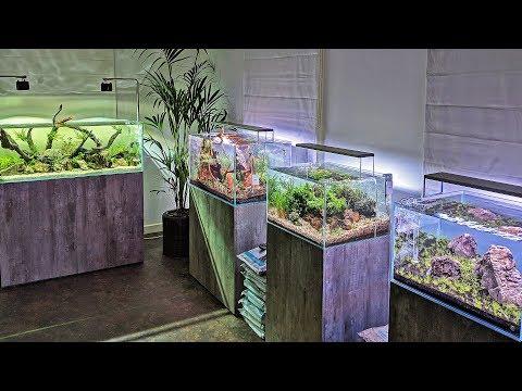 Beautiful New Aquascaping Store
