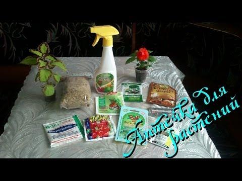 Вредители комнатных растений и борьба с ними, защита растений, как избавиться
