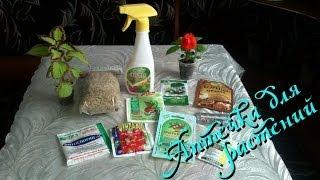 Вредители комнатных растений и борьба с ними, защита растений, как избавиться(, 2014-05-15T11:23:08.000Z)