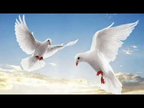 Песни моего детства: попурри советских песен на тему птиц