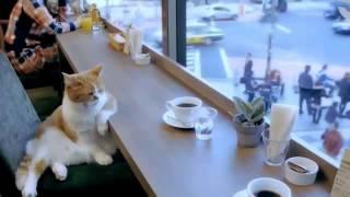 Кот скучает за чашкой кофе:)