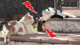 Cat Gets His Heart Broken by His Girlfriend and Takes Revenge!