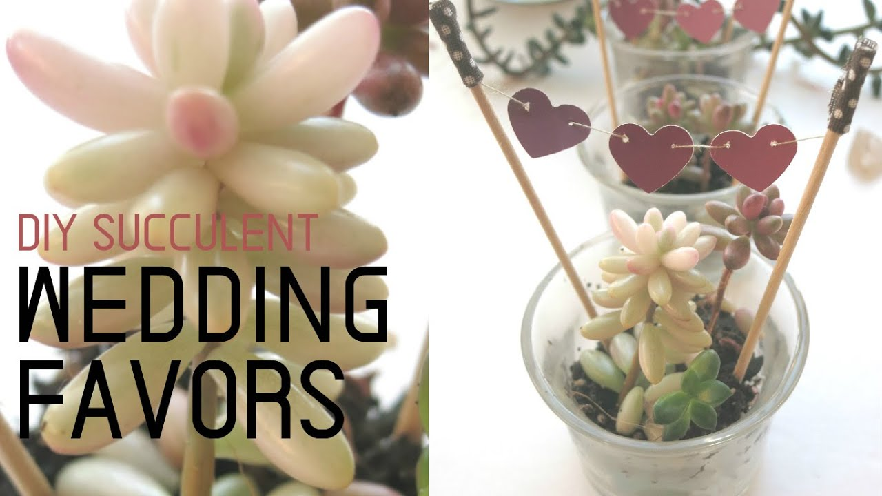 DIY Succulent Wedding Favors || I Like DIY Projects - YouTube