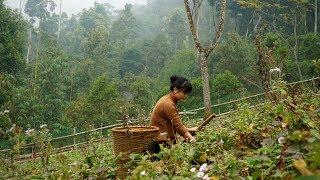Bánh Khoai Mứt Khoai Và Canh Khoai Cho Mùa Đông Ấm Áp | Bếp Nhỏ Vùng Cao