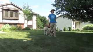 Pack Walk 9/7/2014 | Follow The Leader Dog Training And Rehabilitation Llc