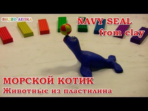 Как слепить из пластилина морского котика