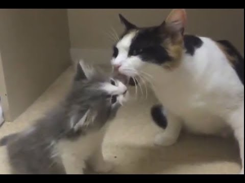 Very Caring Cat Mom And Super Cute Kitten