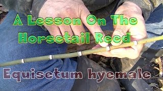 A Lesson On The Horsetail Reed