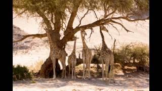 Namibia: Damaraland, Kaokoveld, Etosha West, 2012 (HD)