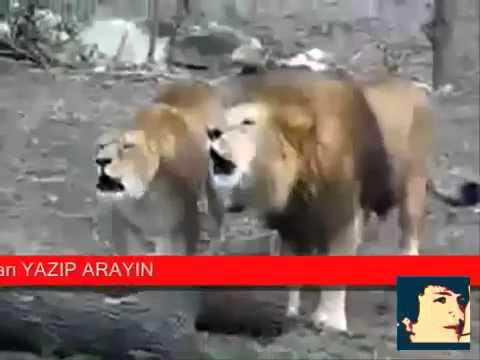 allah diye bağıran hayvanlaratmehmet ali arslan haber news