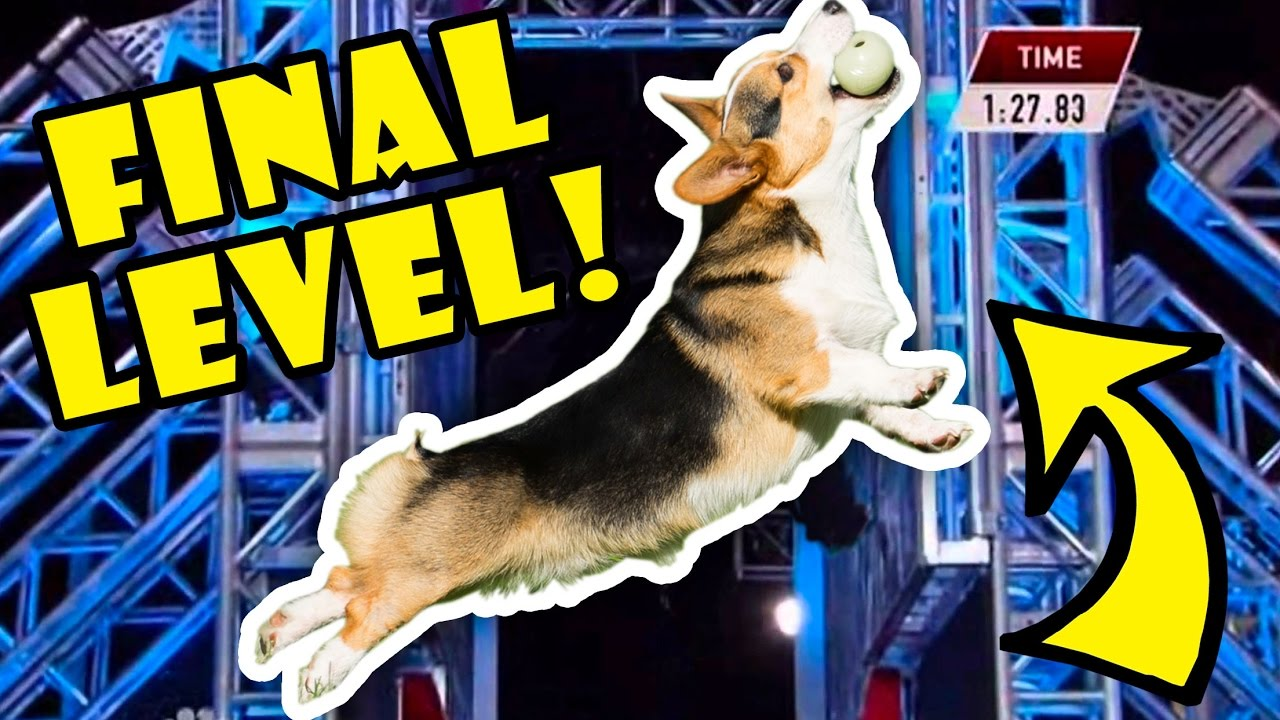 corgi-attempts-final-level-obstacle-course-life-after-college-ep-534