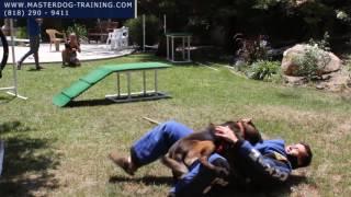 Fully Trained Bodyguard Dogs - Master Dog Training - 818-290-9411