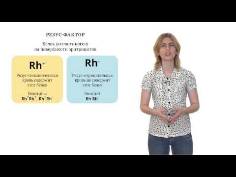 Генетика человека и медицинская генетика. Решение генетических задач - 14