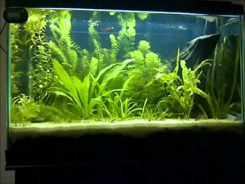 Controlling Black Beard Algae