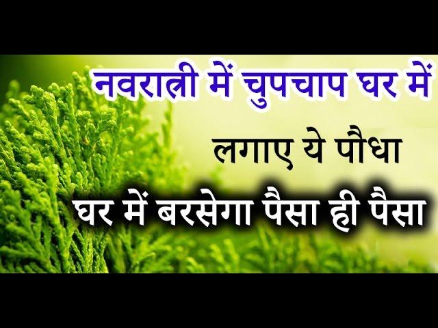 नवरात्री में चुपचाप घर में लगाए ये पौधा, घर में बरसेगा पैसा ही पैसा