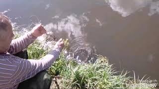 Платная рыбалка в Сумской области! Карп, карась.