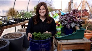 Planting Herbs for Beginners