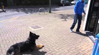Is This How You Wish Your Dog Would Be When Going Into A Store?  Amazing!
