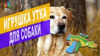 Игрушка утка для собаки | Обзор Игрушки утки для собак