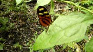 mariposa, motyl, butterfly